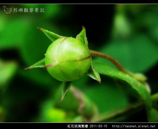 紅花琉璃繁縷-09.jpg