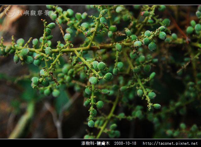 漆樹科-鹽膚木_01.jpg