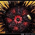 紫海膽_04.jpg