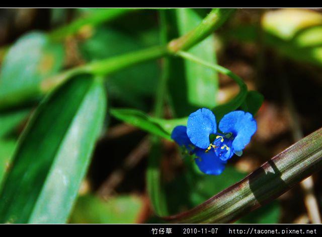 竹仔草_06.jpg