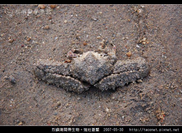 強壯菱蟹_05.jpg
