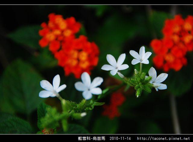 藍雪科-烏面馬_08.jpg