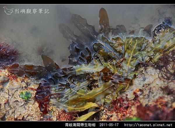 潮間帶生物_26.jpg
