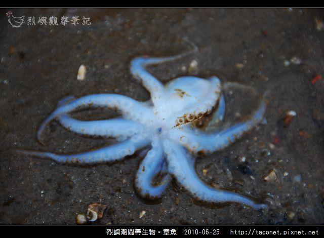 章魚_09.jpg