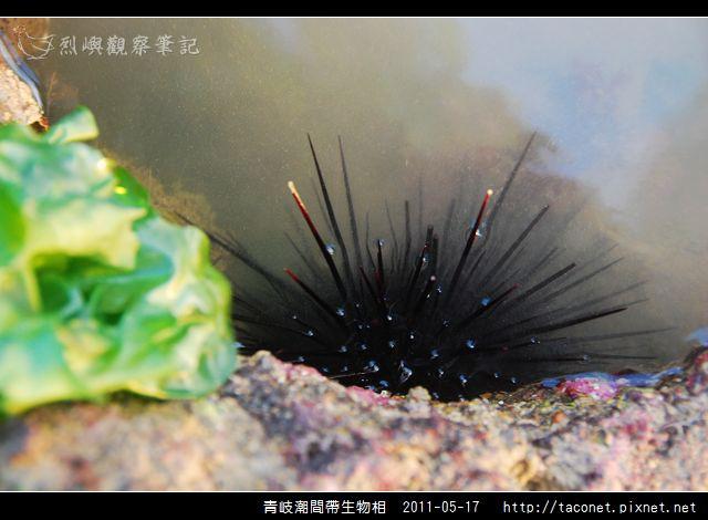 潮間帶生物_40.jpg