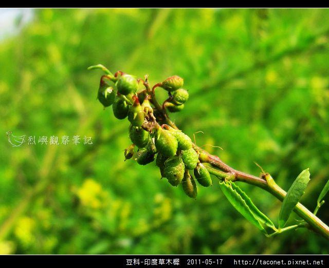 豆科-印度草木樨_14.jpg