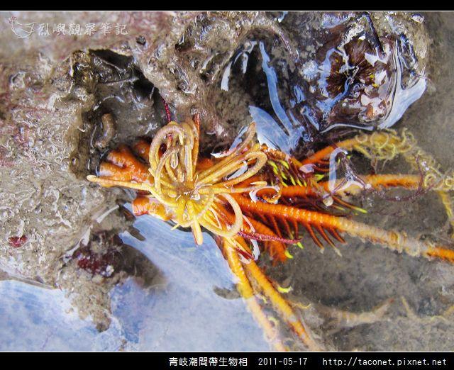 潮間帶生物_53.jpg
