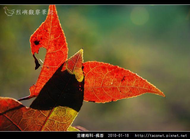 金縷梅科-楓香_22.jpg