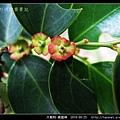 大戟科-黑面神_09.jpg