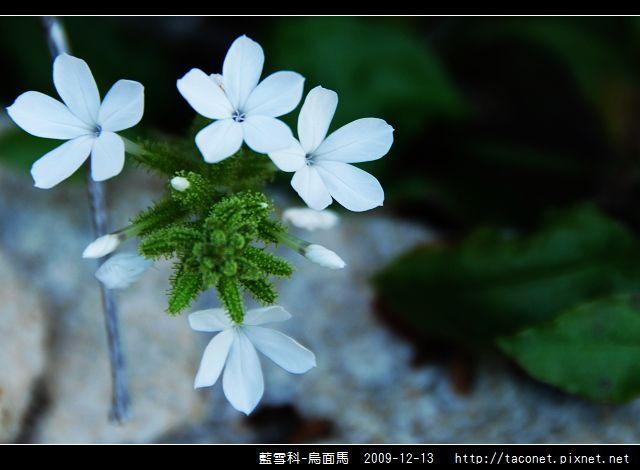 藍雪科-烏面馬_10.jpg