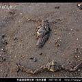 強壯菱蟹_04.jpg