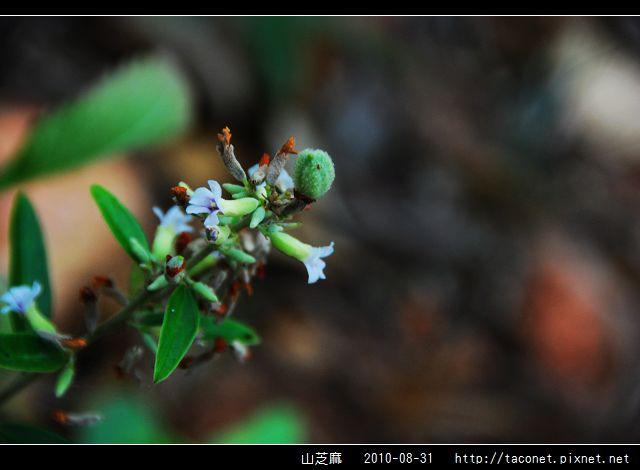山芝麻_04.jpg