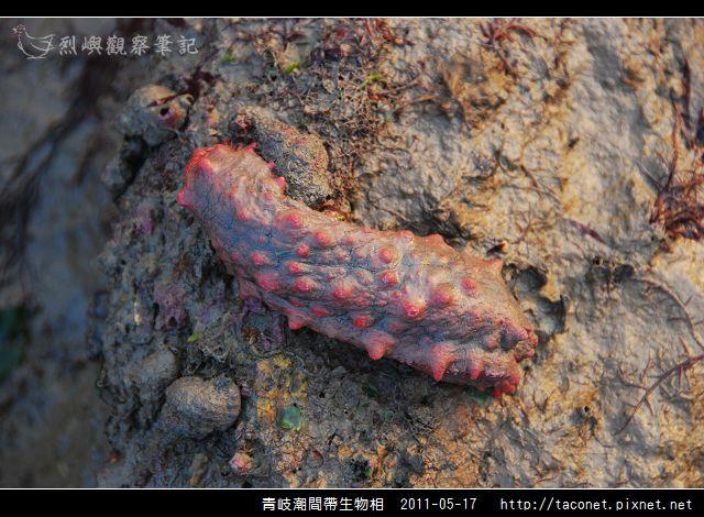 潮間帶生物_39.jpg