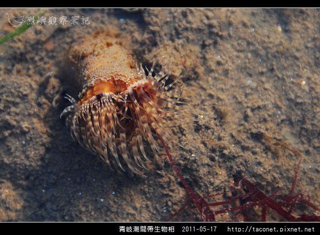 潮間帶生物_08.jpg