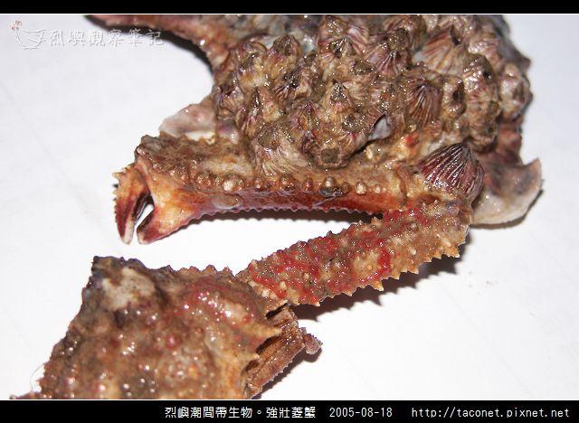 強壯菱蟹_03.jpg