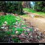 西湖旁廢棄物