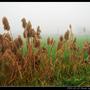濃霧_18.jpg