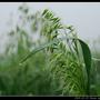 濃霧_25.jpg