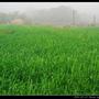 濃霧_27.jpg