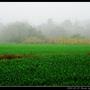 濃霧_34.jpg