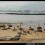 湖井頭海岸景觀_87.jpg