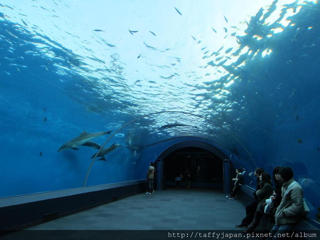 橫濱水族館