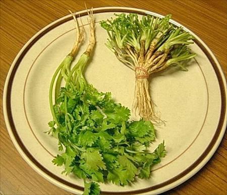 coriander roots
