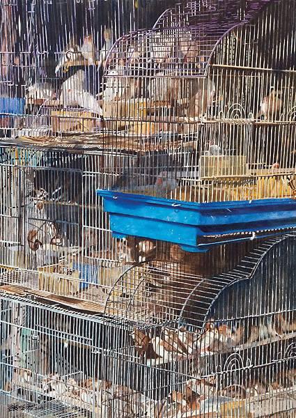第45期-鳥籠108x77cm水彩2003張明祺.jpg
