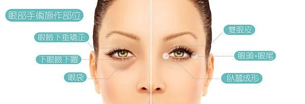 1.眼部手術施作部位