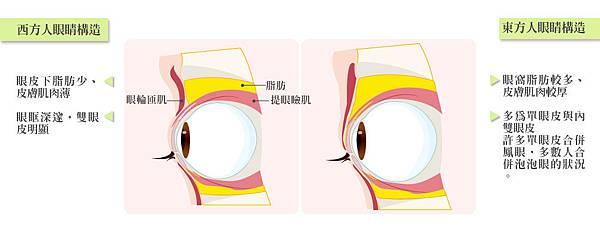 2.東西方眼皮差異