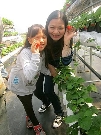 採草莓-1