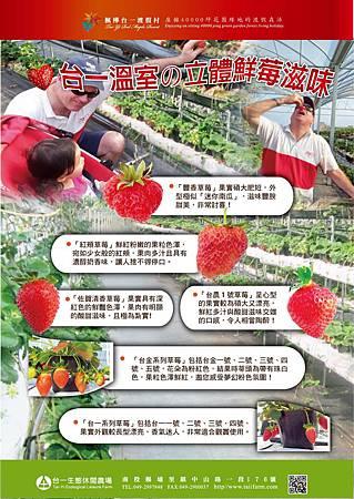 台一草莓介紹EDM-1