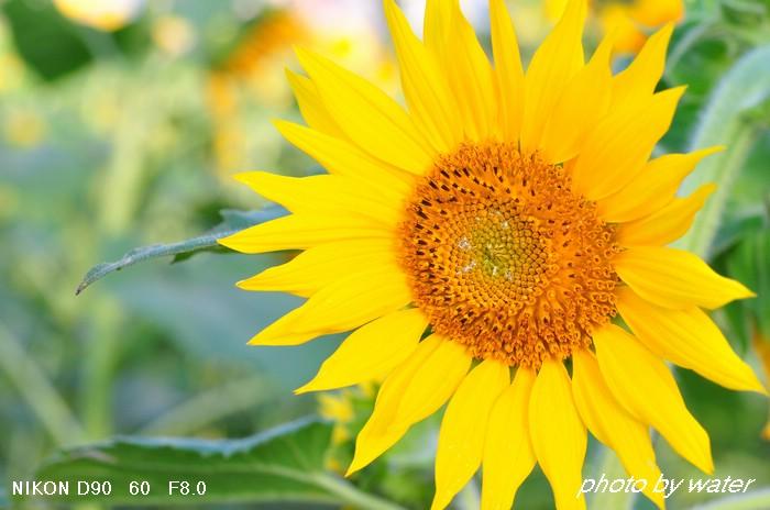 DSC_6576.jpg