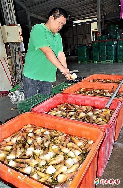 綠竹筍凍長 產期延後1個月