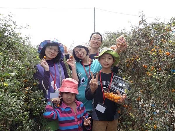 將軍區農會推出小番茄體驗營,遠從新竹南下參與活動的全家人展示採摘成果。(記者盧萍珊攝)