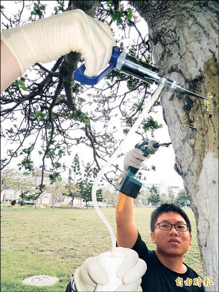 樹木生病也要打針防治。