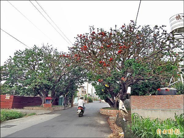 刺桐夫妻樹位在安定區(左)與安南區(右)交界處。