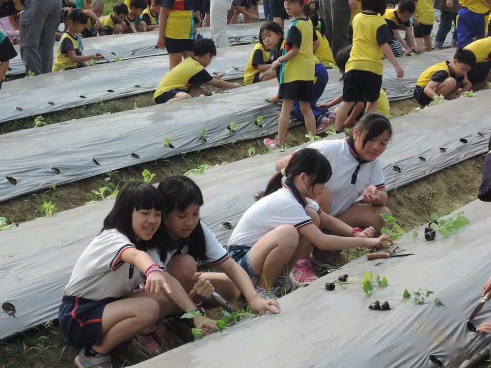 官田國小昨天第一堂課安排學生到幸福農場種菜,學生們相當忙碌。