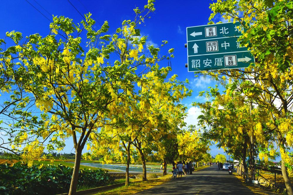 去年台南阿勃勒花季得獎作品。(圖/南市觀旅局提供)
