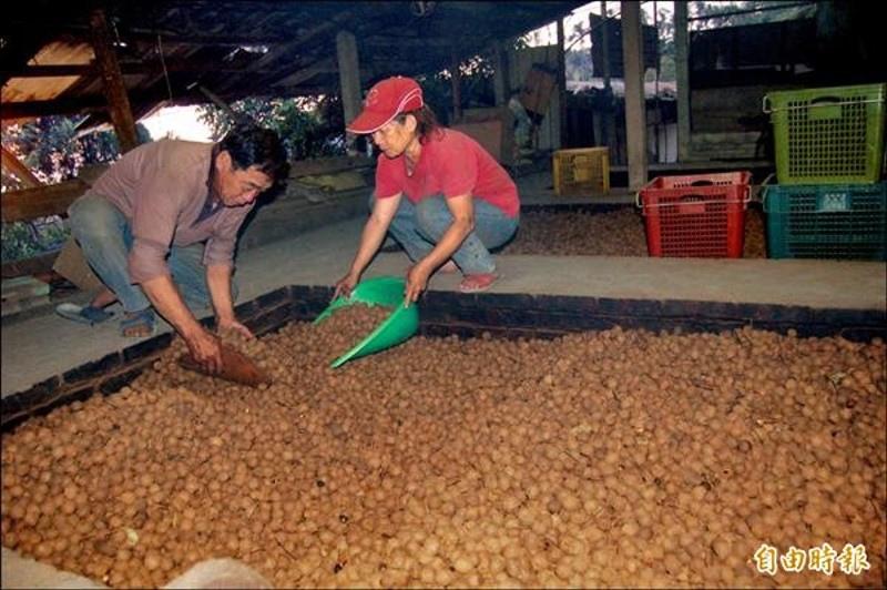 農民胡訓、陳瑩如夫婦在高溫煙燻焙灶內合力進行清枝、翻焙等程序,全程手作,相當辛苦。