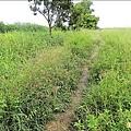南台南副都心二期工程用地,荒草漫漫,成為螢火蟲的絕佳棲地。