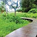 巴克禮公園二期工程以木棧道架高,保留螢火蟲棲地。