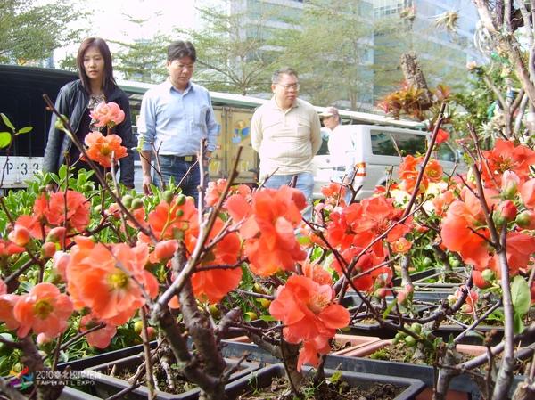 圖一:台北花市攤位販售春節應景又流行的寒梅。.jpg