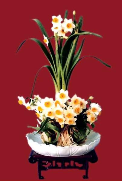 圖七:水仙花雕刻作品.jpg