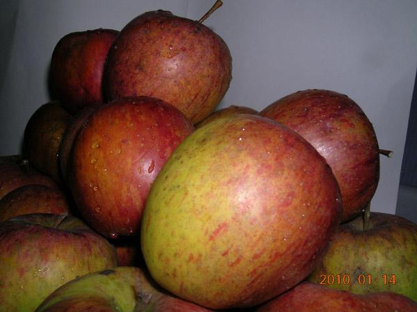 蜜蘋果1.JPG