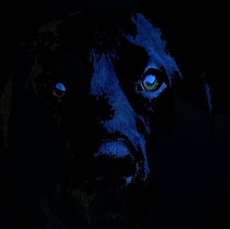 black_Dog_ghost