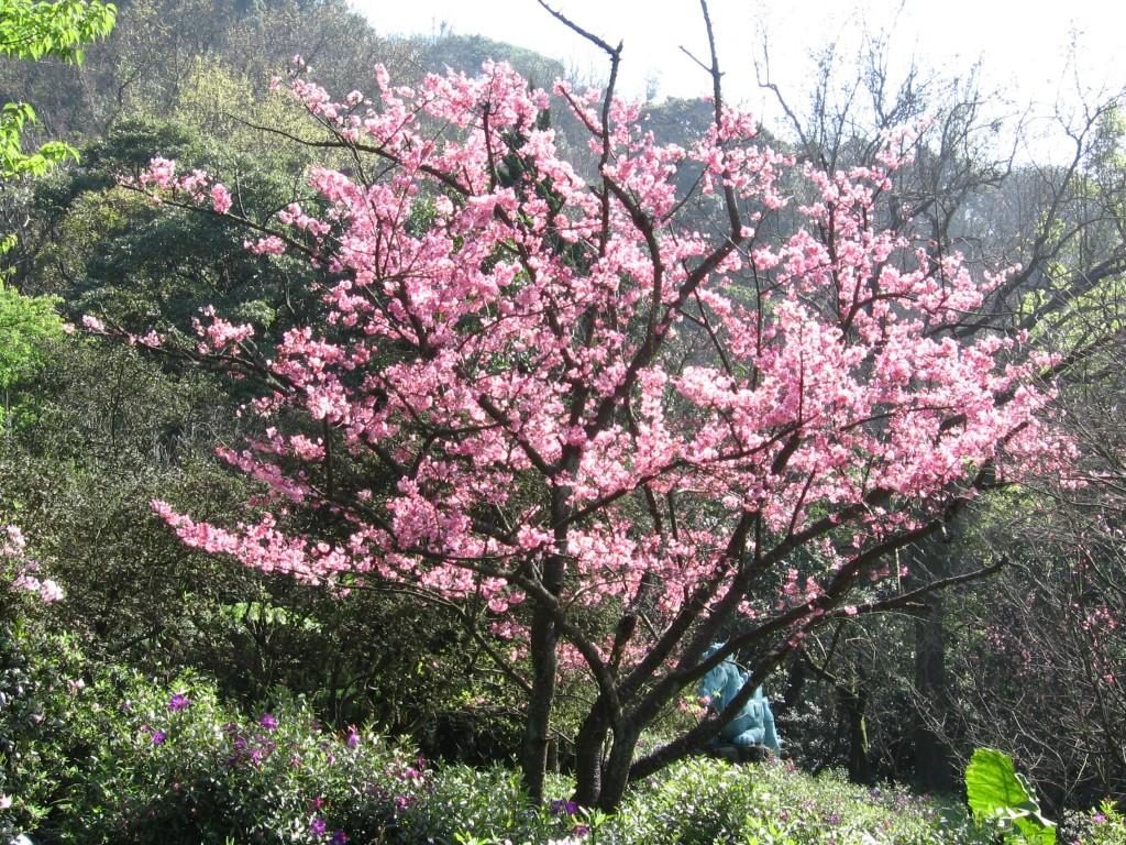 tree01-36.jpg