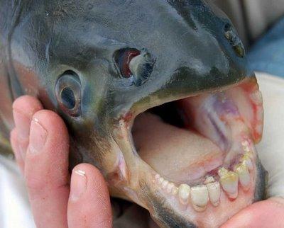 human_teeth_01.jpg