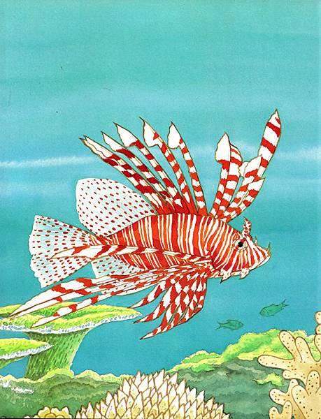 美麗的珊瑚礁1.jpg