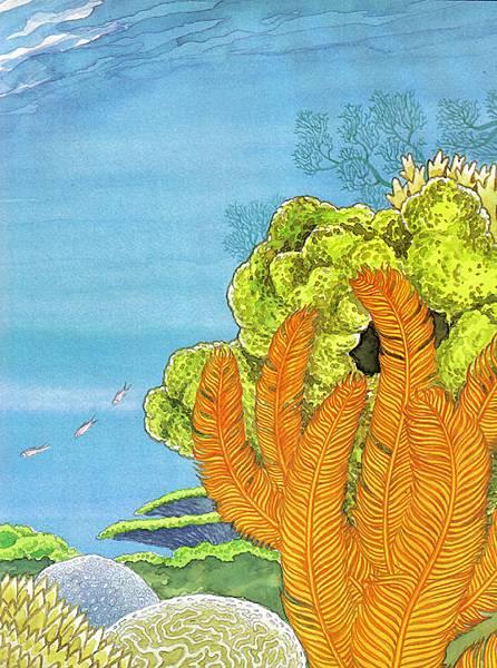 美麗的珊瑚礁3.jpg